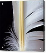 White Feather Acrylic Print by Bob Orsillo