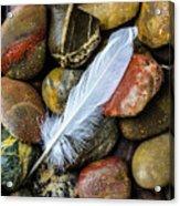 White Feather On River Stones Acrylic Print