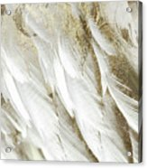 White Feathers With Gold Acrylic Print