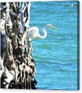 White Fisherman Acrylic Print