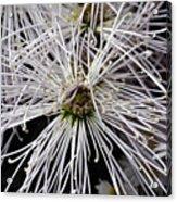 White Flora Acrylic Print