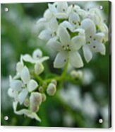 White Floral Cluster Acrylic Print