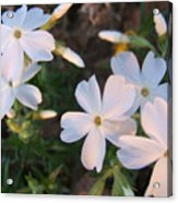 White Floral Lights Acrylic Print