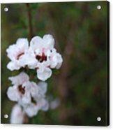 White Floral On Green Acrylic Print