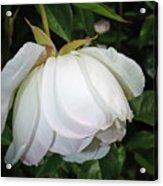 White Floral Acrylic Print