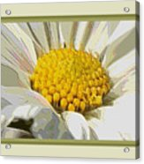 White Flower Abstract With Border Acrylic Print