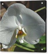 White Flower Acrylic Print