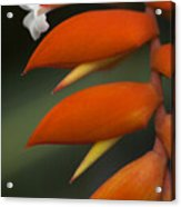 White Flower And Orange Acrylic Print