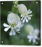 White Flowers 02 Acrylic Print