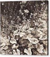 White Flowers 1877 12 3h9 Ivan Ivanovich Shishkin Acrylic Print