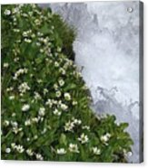 White Flowers And Water Acrylic Print
