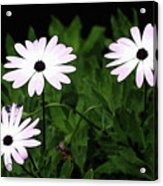 White Flowers In The Garden Acrylic Print