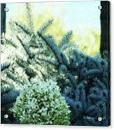 White Flowers W15 Acrylic Print