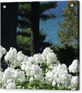 White Flowers W16 Acrylic Print