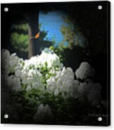 White Flowers With Monarch Butterfly Acrylic Print