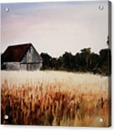 White For Harvest Acrylic Print