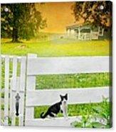 White Gate Cat Acrylic Print
