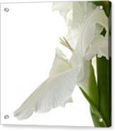 White Gladiola Acrylic Print