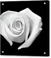 White Heart-shaped Rose Acrylic Print