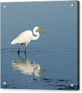 White Heron Reflected Acrylic Print by Barry Culling