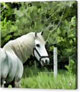 White Horse In A Green Pasture Acrylic Print