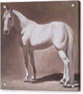 White Horse Study Acrylic Print