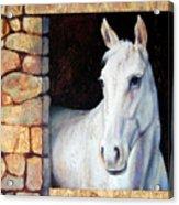 White Horse1 Acrylic Print
