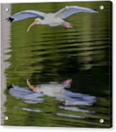 White Ibis And Reflection Acrylic Print