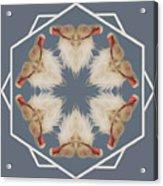 White Ibis Snowflake Acrylic Print