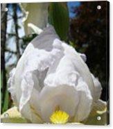 White Iris Flower Art Prints Canvas Irises Artwork Acrylic Print