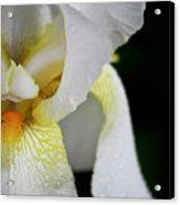 White Iris Study No 3 Acrylic Print
