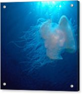 White Jellyfish Acrylic Print