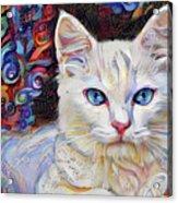 White Kitten With Blue Eyes Acrylic Print