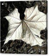 White Leaf On The Ground Acrylic Print