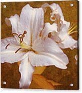 White Lilies. Time To Be Romantic Acrylic Print