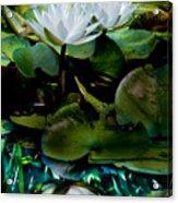 White Lilies, White Reflection Acrylic Print