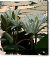 White Lillies Acrylic Print by Kimberly Camacho