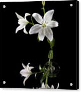 White Lilly With Reflection And Water Drop Acrylic Print