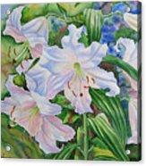 White Lily. 2007 Acrylic Print