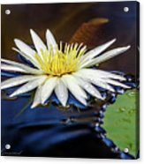 White Lily On Pond Acrylic Print