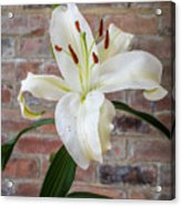 White Lily Portrait Acrylic Print