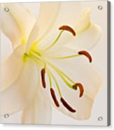 White Lily Square Version Acrylic Print