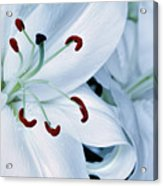 White Lily Triptych Part1 Acrylic Print