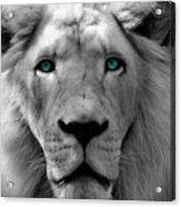 White Lion Hue Acrylic Print