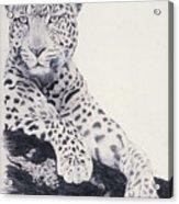 White Loepard Acrylic Print