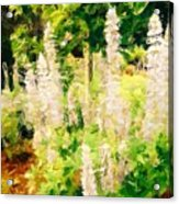 White Lupins Acrylic Print