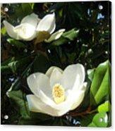 White Magnolia Flowers 01 Acrylic Print