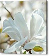 White Magnolia Tree Flower Art Prints Magnolias Baslee Troutman Acrylic Print