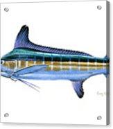 White Marlin Acrylic Print