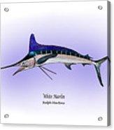 White Marlin Acrylic Print by Ralph Martens